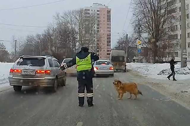 Остановивший поток машин ради хромой собаки инспектор ДПС ранее спас девушку